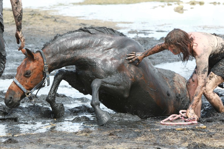 Feature Rates Apply.Mandatory Credit: Photo by Newspix/Rex / Rex USA (989619l)Nicole Graham comforts her 18-year-old horse 'Astro' as members of the Country Fire Authority (CFA) and the State Emergency Services (SES) attempt to free the 500kg horseHorse rescued from thick mud at Avalon Beach in Geelong, Victoria, Australia - 26 Feb 2012Saved from tidal terrorIT was a race against the tide that pulled at the heartstrings. For three hours yesterday, show horse Astro was stuck neck deep in thick mud at Avalon Beach on Corio Bay as the tide inched closer. Rescue crews first tried to pull the 18-year-old, 500kg horse free with fire hoses, and then a winch before a vet turned up to sedate Astro and pull him clear with a tractor. The crews knew by 5pm the tide would have come all the way in. But within minutes of the waters rising around him, Astro was being dragged up on to solid ground slowly but surely, the team filthy but ecstatic. Owner Nicole Graham (above) said she and daughter Paris, 7, set off at noon when without warning she sunk up to her waist in thick, smelly muck.
