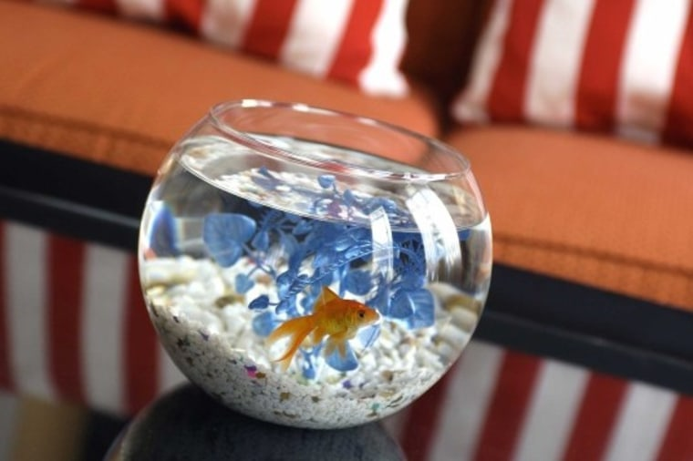 Children can borrow a pet fish for the length of their stay at Hotel Monaco in San Francisco.