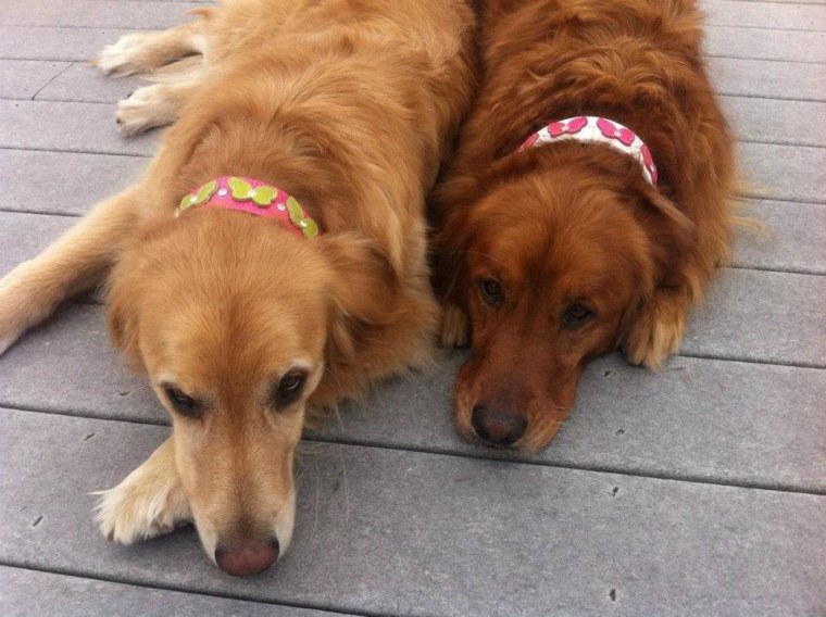 Help your pet look good with these stylish collars.
