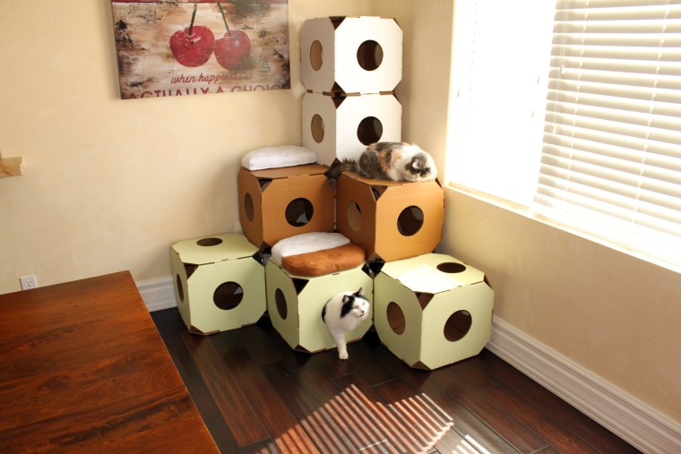 Give your cat the perfect stimulation with these American-made boxes.