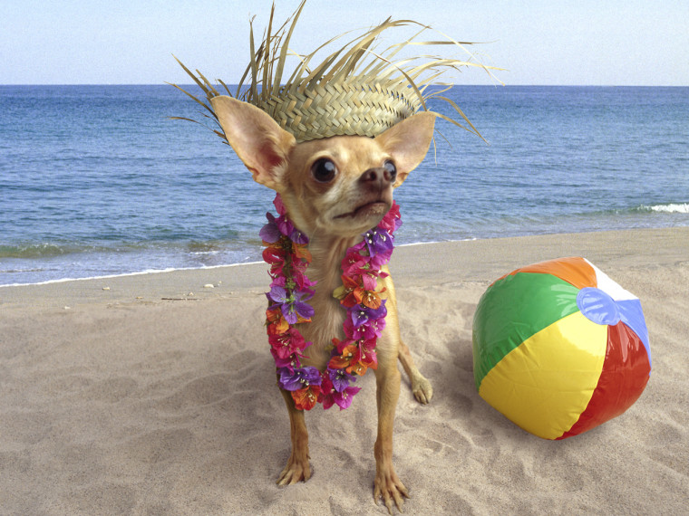 Do your pets enjoy going on vacation? Show us!