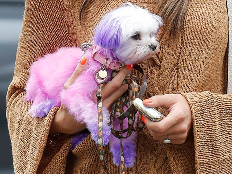 Pretty in pink? The dye treatment Ambrosio's puppy underwent has PETA concerned.