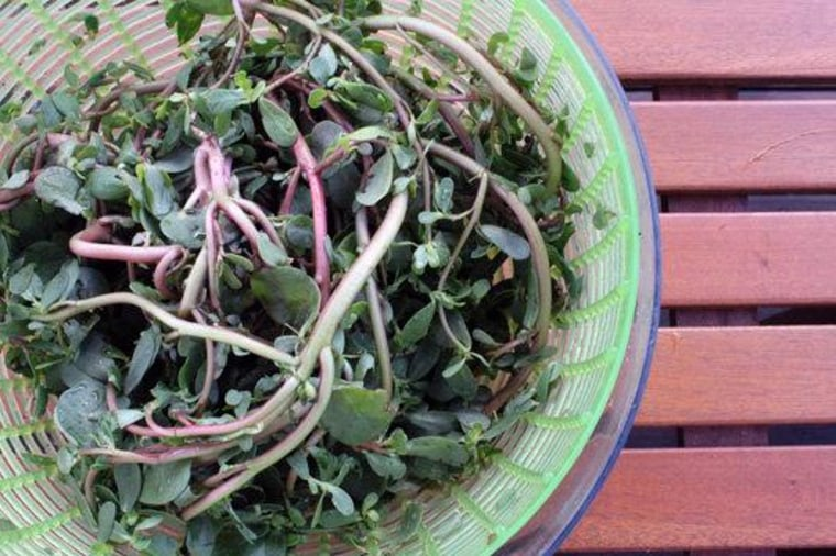 Try purslane, an abundant weed that has the highest amount of omega-3s of of any leafy greens.