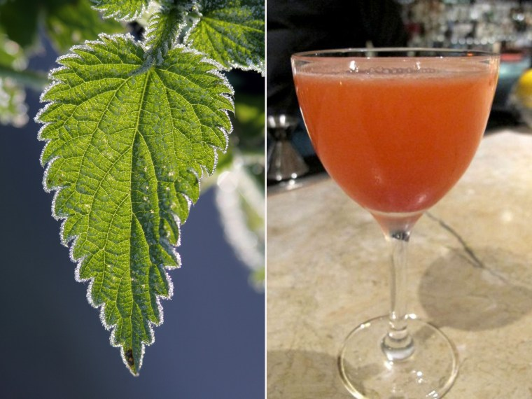 The 9 Herb Charm cocktail at Fifth Floor restaurant in San Francisco is made with nettles.
