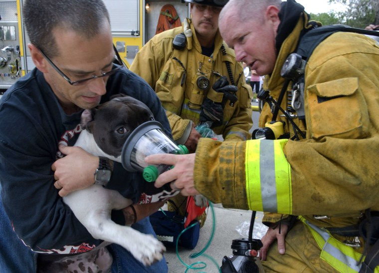 Held by his owner, Clyde, a pitbull, is given oxygen by Garden Grove Fire Department Captain Jeff Wilkins, right, on Thursday, June 21, 2012 in Garden Grove, Calif.