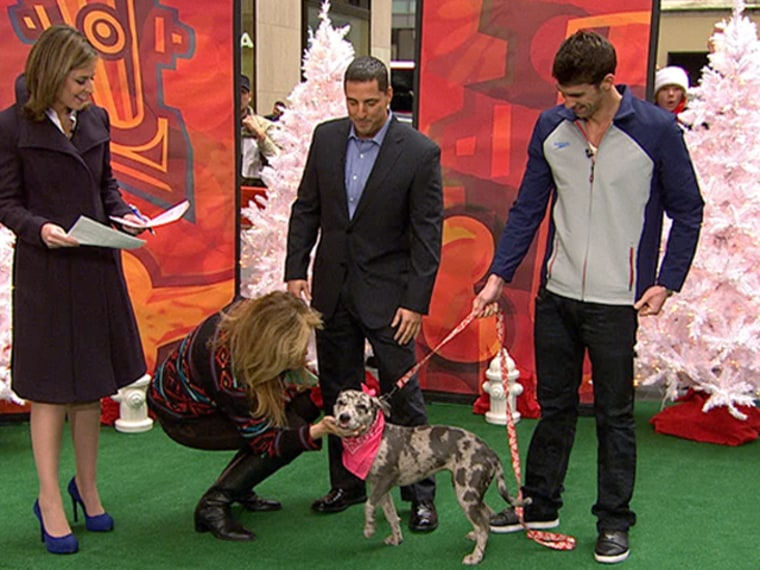 Love at first sight! Michael Phelps met Penelope on TODAY and couldn't help but adopt her.