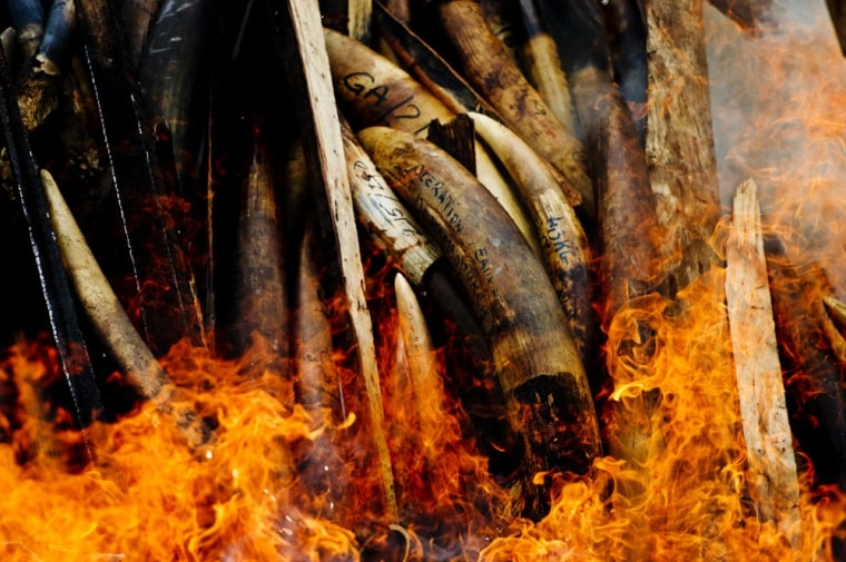 Seized elephant tusks and ivory ornaments go up in smoke Wednesday in Libreville, Gabon.