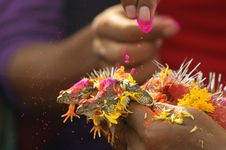 The wedding of two frogs, arranged by farmers seeking rainfall, is performed in Nagpur on June 29, in order to please the Rain Gods and in the hope that their region would soon receive monsoon showers. People blew trumpets and sang songs, as the priest solemnized the marriage with the usual Hindu marriage rituals to the chanting of Hindu hymns and by putting streaks of vermilion on the female frog's head. The frogs were picked up from different ponds, following the local belief among the farmers in this part of India that a frog marriage pleases the Rain Gods and ensures a good harvest with rain.