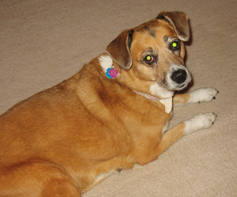 Ginger is a dog with kidney failure possibly tied to jerky treats.