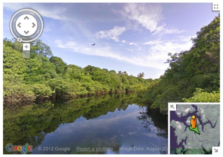 Rio Negro tributary