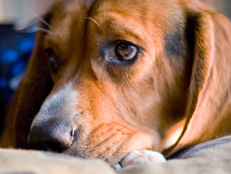 Yes, he's adorable and giving you bedroom eyes. But your pooch may be the reason you're not getting good sleep.