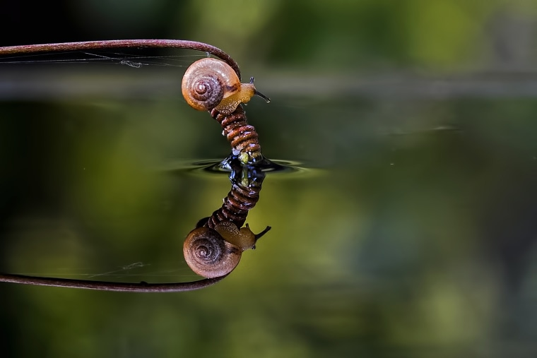 A snail hangs from a branch over morning dew collected on Rizani's table.