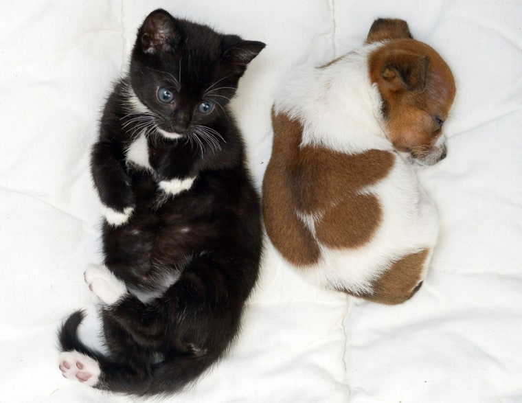 8 photos of a puppy and kitten who think they're sisters