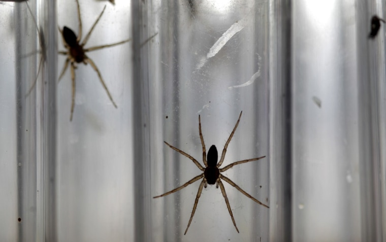 Spiders! Ants! Did that make you itchy? Here's why