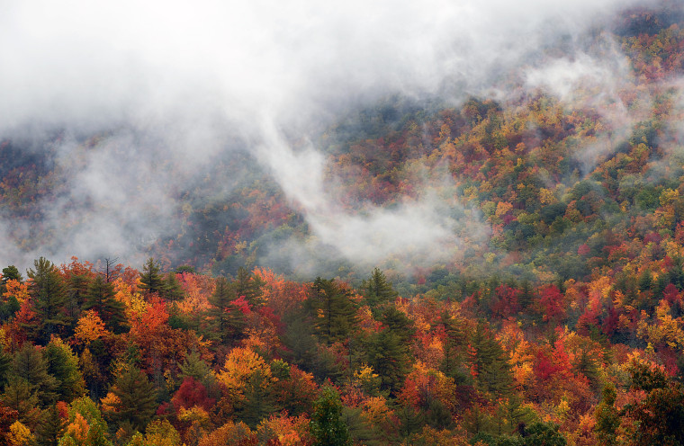 A view near the Lost Cove Cliffs Overlook, mile marker 310 on the Blue Ridge Parkway, shows the fog passing through the mountains on Thursday, Oct. 13. Colors are still peaking in some areas below 4,000 feet, especially south of Grandfather Mountain in the Linville to Little Switzerland area on the Blue Ridge Parkway, according to Dr. Howard S. Neufeld, a professor of plant ecophysiology in the Department of Biology at Appalachian State University, in Boone, N.C.