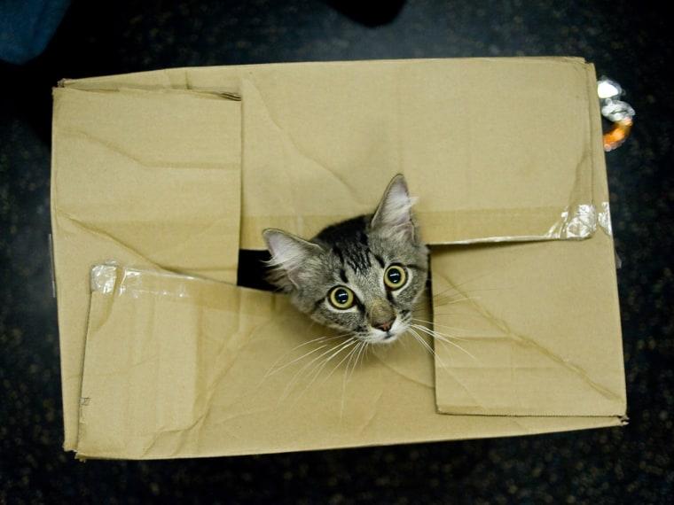 Uh-oh, cat in a box!