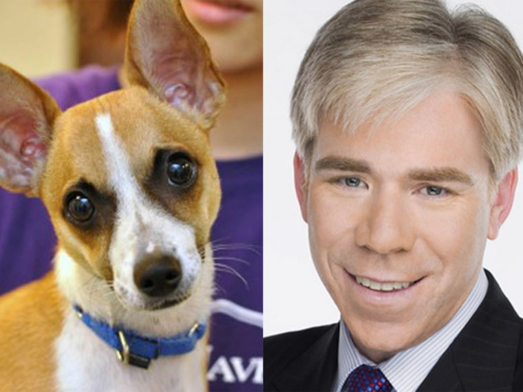 David Gregory, the dog, and David Gregory, the anchor.