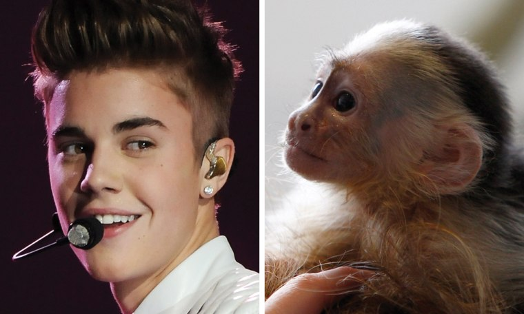 Justin Bieber, left, and Mally, the singer's pet monkey -- currently at a home for animals in Munich, Germany.