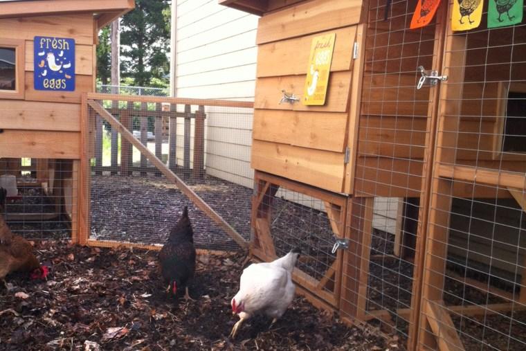 Image: Chicken hotel