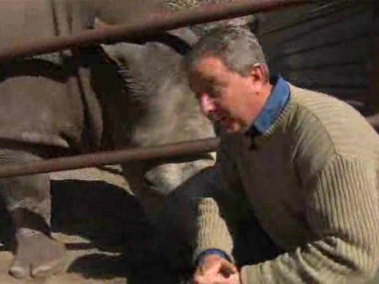Rhino horns in on unwary Kerry Sanders