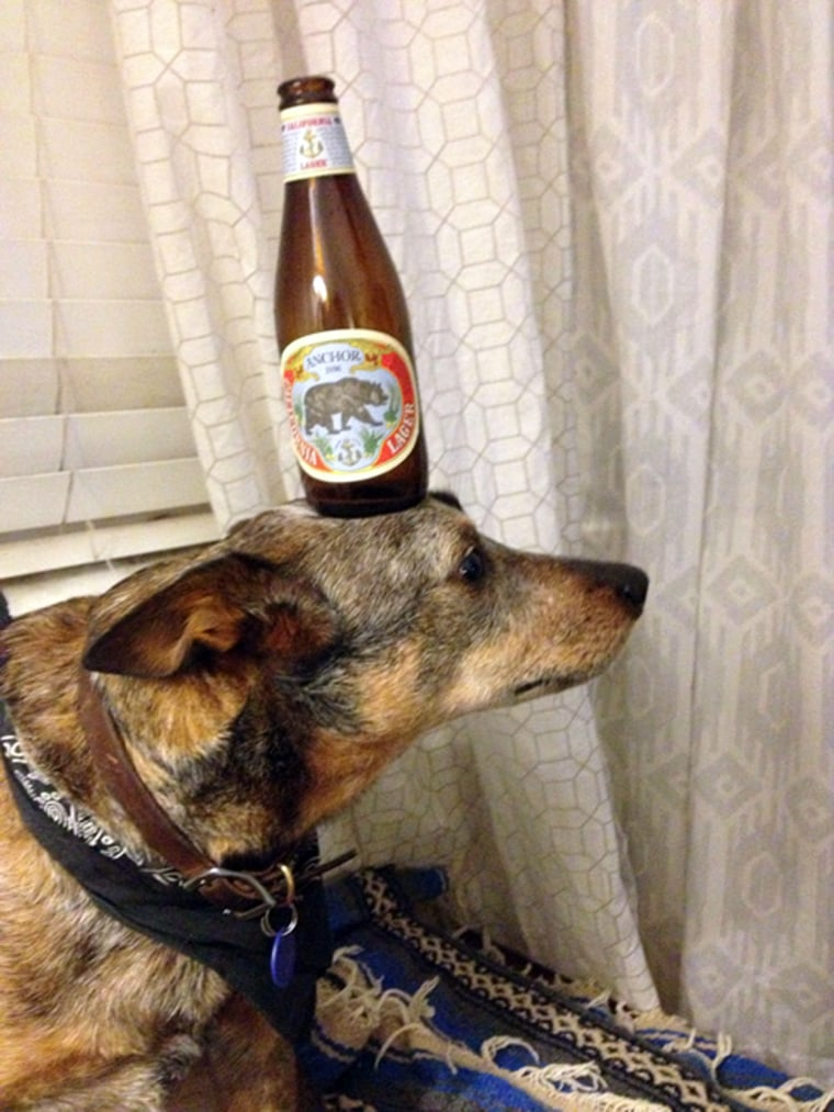 Jack, who is three years old, was adopted as a puppy and quickly showed his owners his ability to balance household items like this beer bottle.
