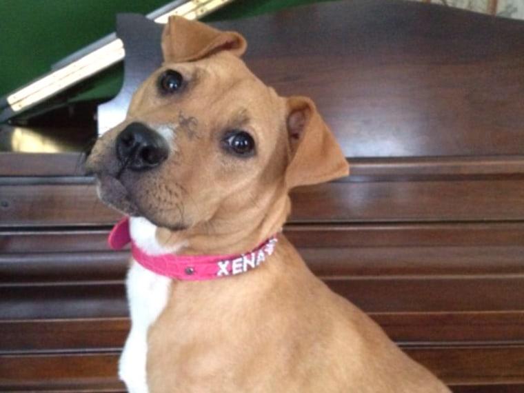 Image: Xena the Warrior Puppy