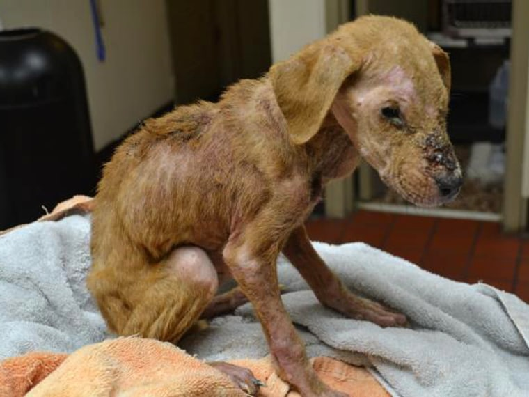 Image: Xena the Warrior Puppy close to death