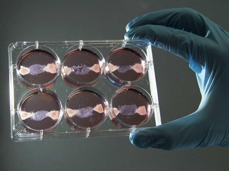 Image: Test-tube meat
