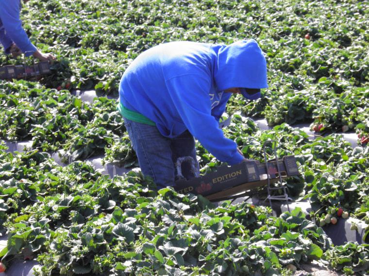 Food Pickers in California