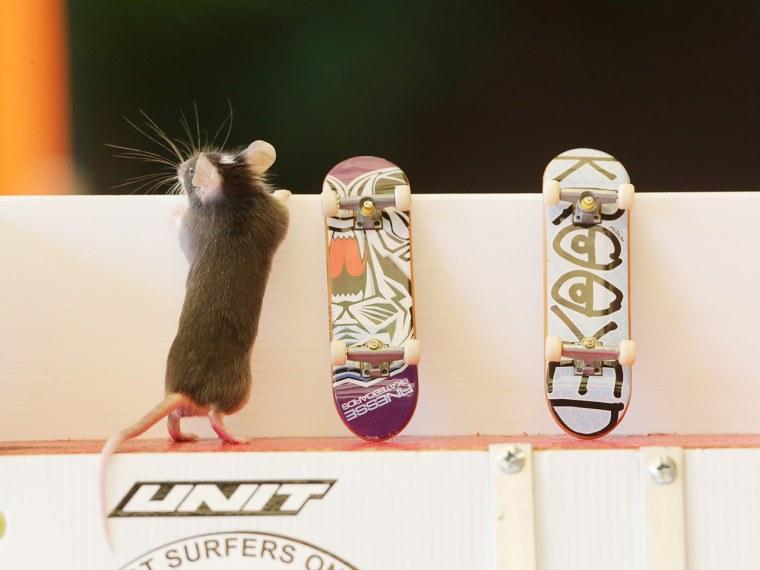 Mice on skateboards