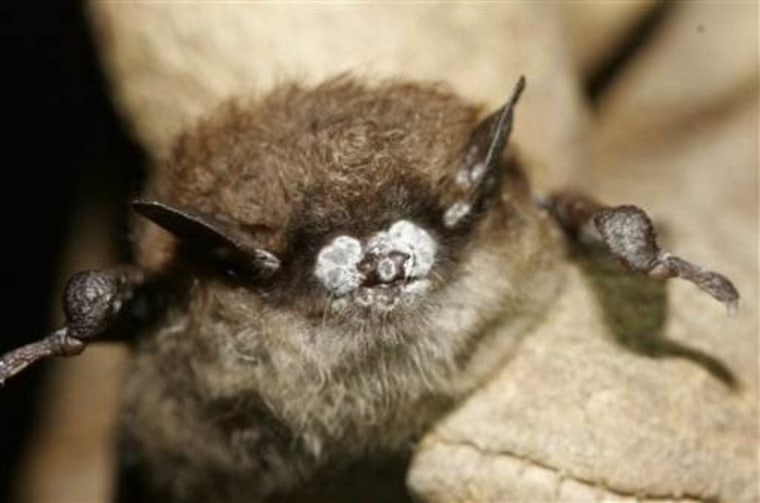 Mysterious deadly bat disease still spreading across U.S.