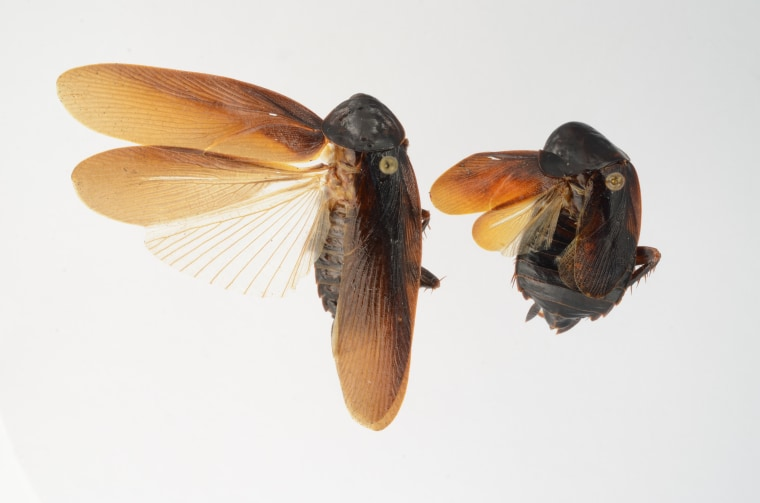Image: Cockroach