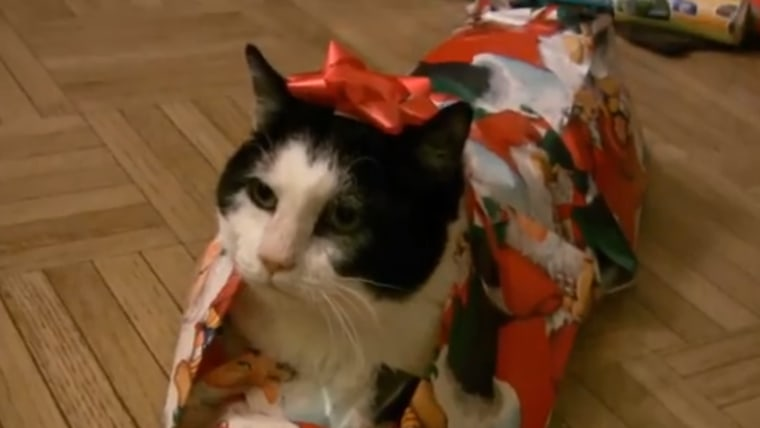 Cat wrapped in Christmas wrapping paper.