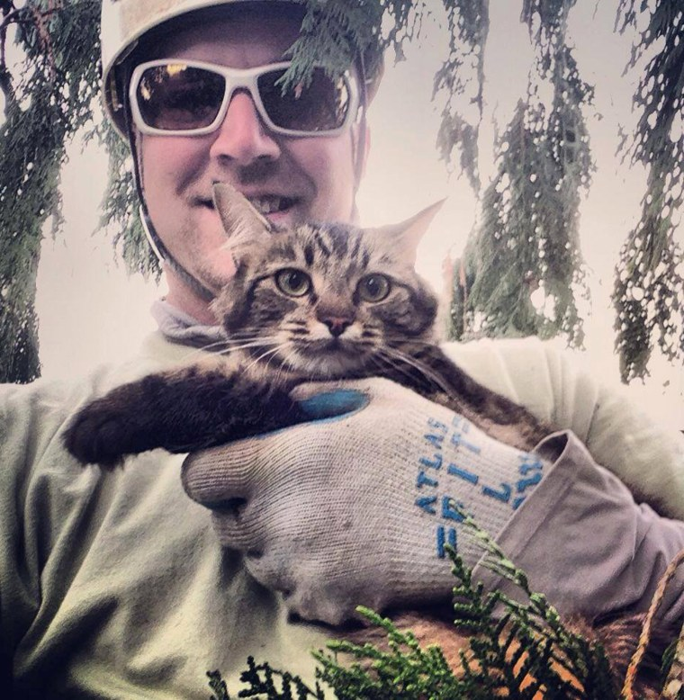 cat stuck in a tree these rescuers have you covered