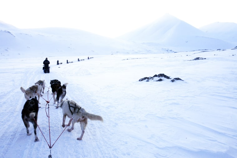 IMAGE: Dogsled team in Arctic
