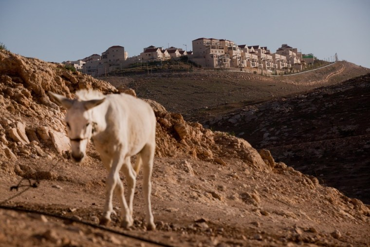 A donkey roams at a Bedouin camp in the E1 area at the Israeli settlement of Maale Adumimin in the West Bank.