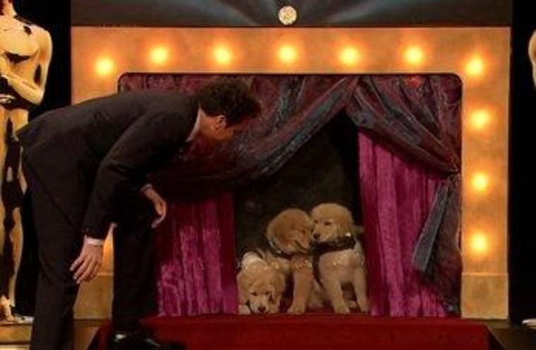 Jimmy Fallon prepares the puppies for their Oscar picks.