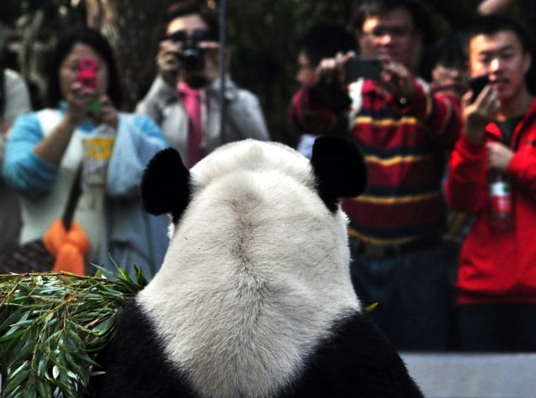 Visitors take photographs of a panda in an enclosure at the Giant Panda Research Base in Chengdu, China, June 24, as thousands of visitors gather for the Duanwu festival or better known as the Dragon Boat festival.