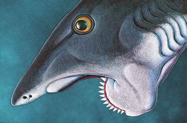 This is a re-creation of a Helicoprion, which lived 270 million years ago and is the only animal ever with a complete 360-degree spiral of teeth.