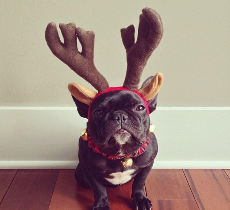 Ho, ho, ho! Just spreadin' some cheer here!
