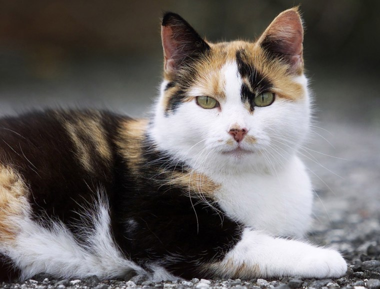 New Zealand businessman Gareth Morgan claims cats have contributed to the extinction of nine native bird species and were affecting 33 endangered bird species.