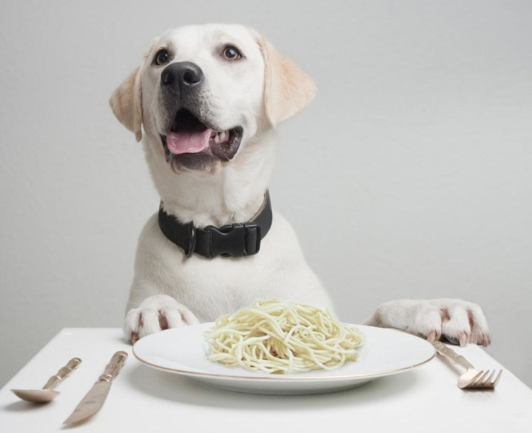 Researchers say that dogs' ability to digest starch was enhanced due to genetic changes that probably occurred in parallel with domestication thousands of years ago.