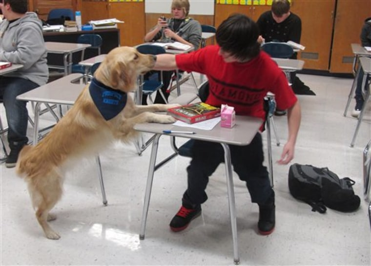 """A student pets Junie, the school's """"therapy dog,"""" at Prospect High School in Mt. Prospect, Ill."""