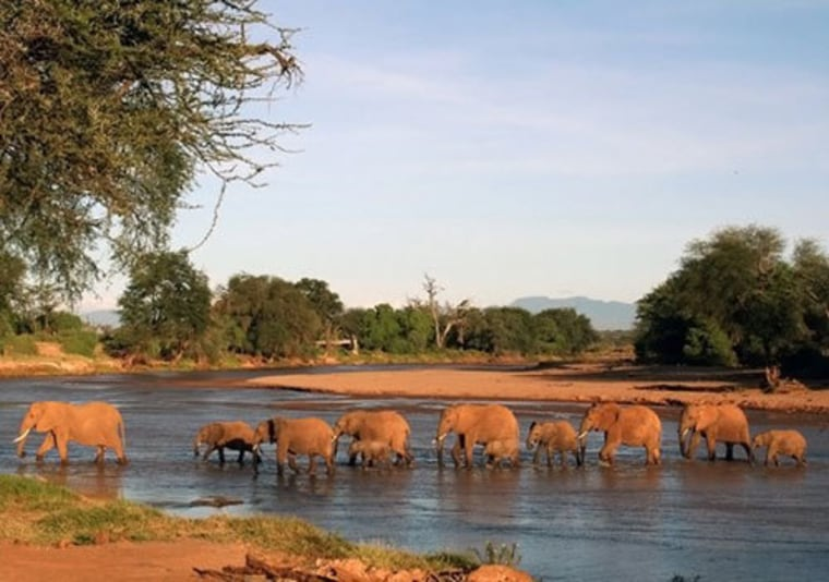 Old bomb tests could help fight today's elephant ivory poaching