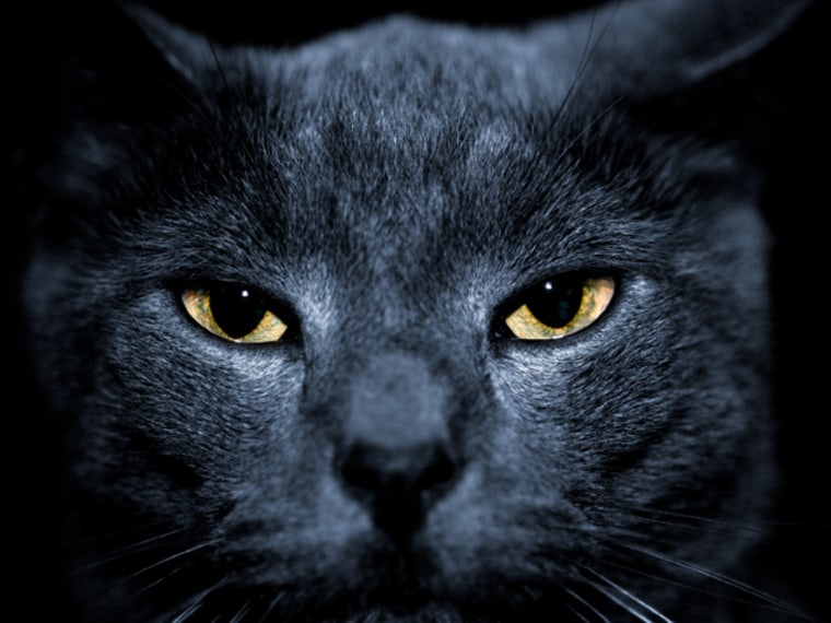 beautiful portrait of a mean looking cat