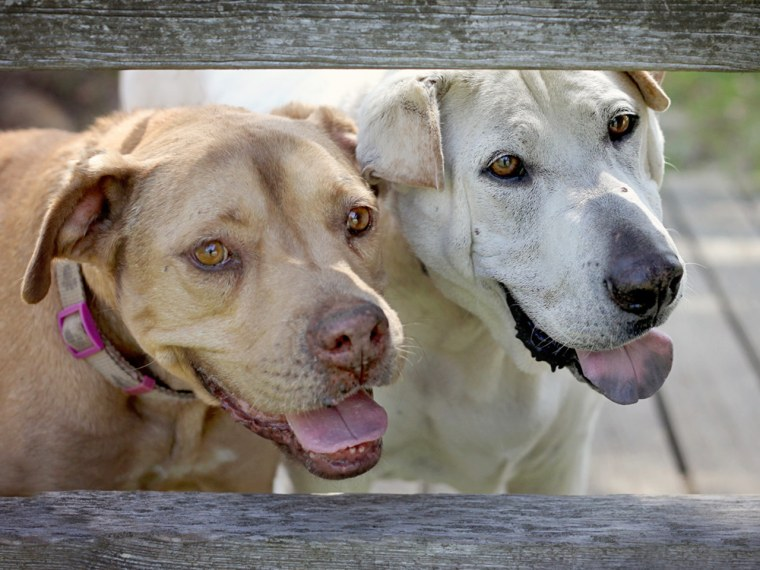 Image: Dogs Flopsy and Sebastian