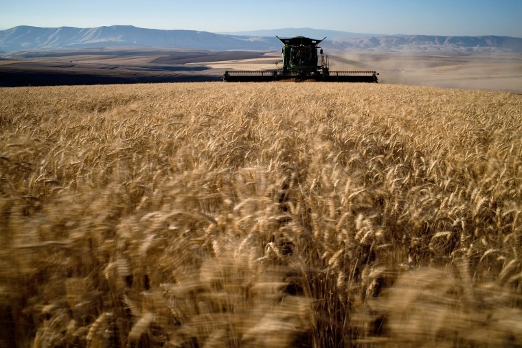 Wheat farmer Bryan Cranston harvests a neighbor's wheat field outside Moro, Ore., on July 19.