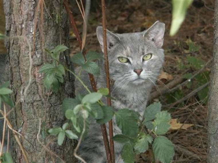 Gang of feral cats attacks woman and her dog in France