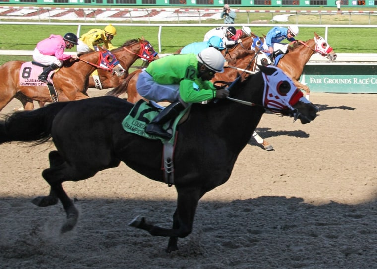 Rocky Mountain Fly (12) with jockey Stevie Gillum aboard, narrowly edges Political Option (3), with John Hamilton in the irons, to win the Louisiana Champions Day Quarter Horse Derby at Fair Grounds Race Course in New Orleans on Dec. 8, 2012.