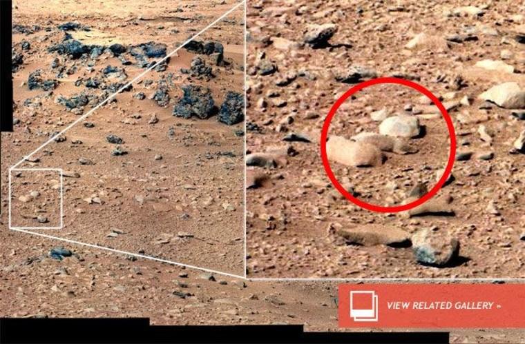'Mars rat' taking Internet by storm